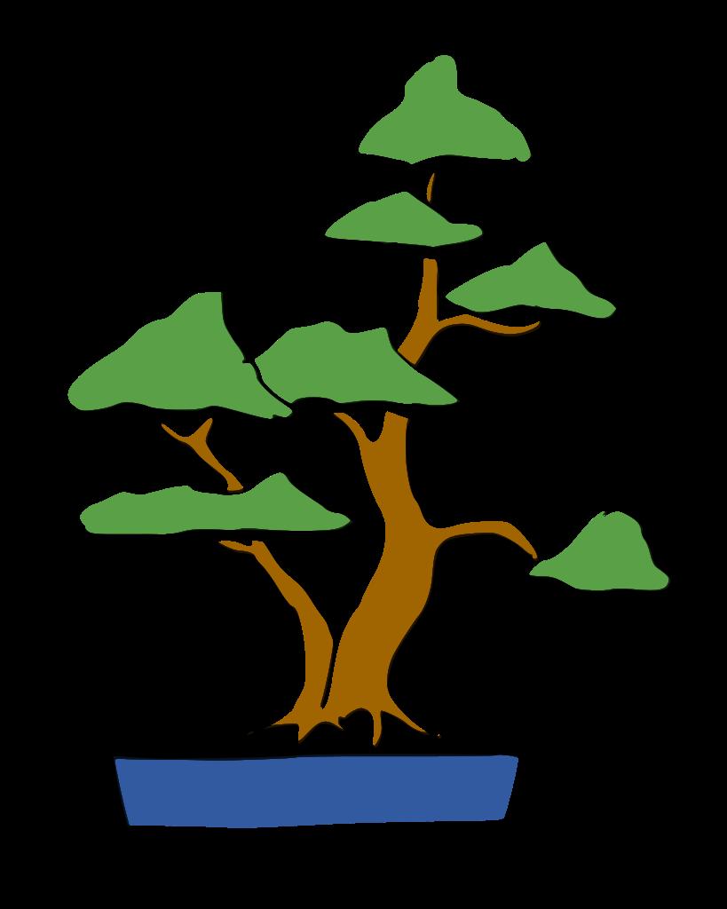 sokan bonsai