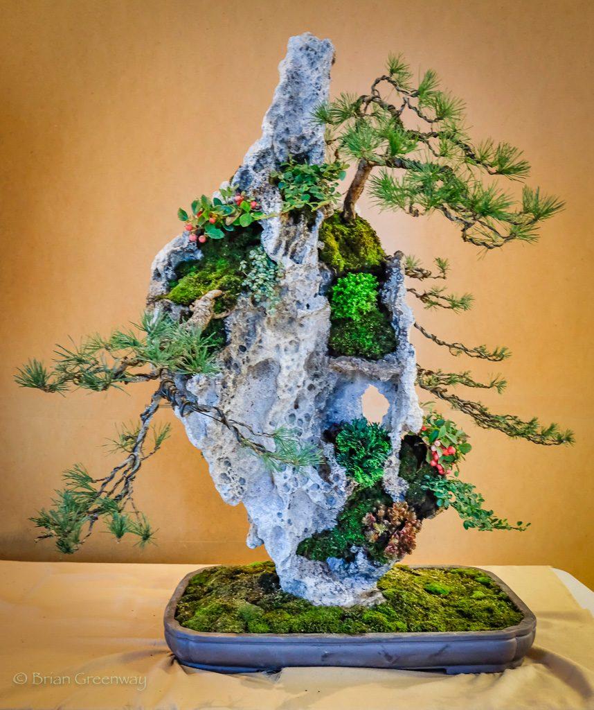 bonsái plantacion en roca