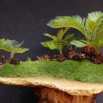 Bonsai de palmera