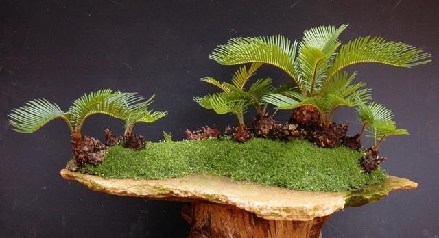 bosque de cycas