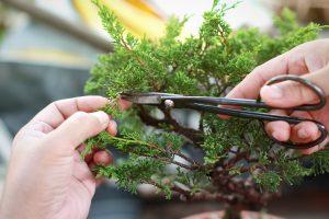En Bonsai Cuidados te enseñamos que cuidar un bonsái no es difícil.