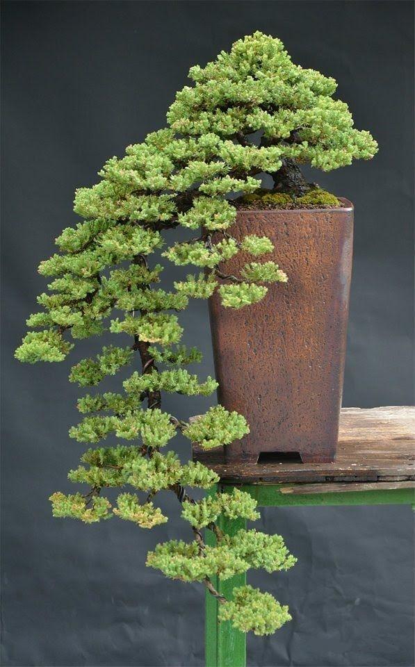 bonsái cascada